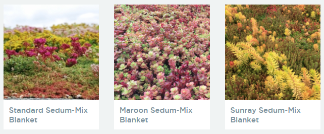 View our Sedum blankets for your Sedum roof