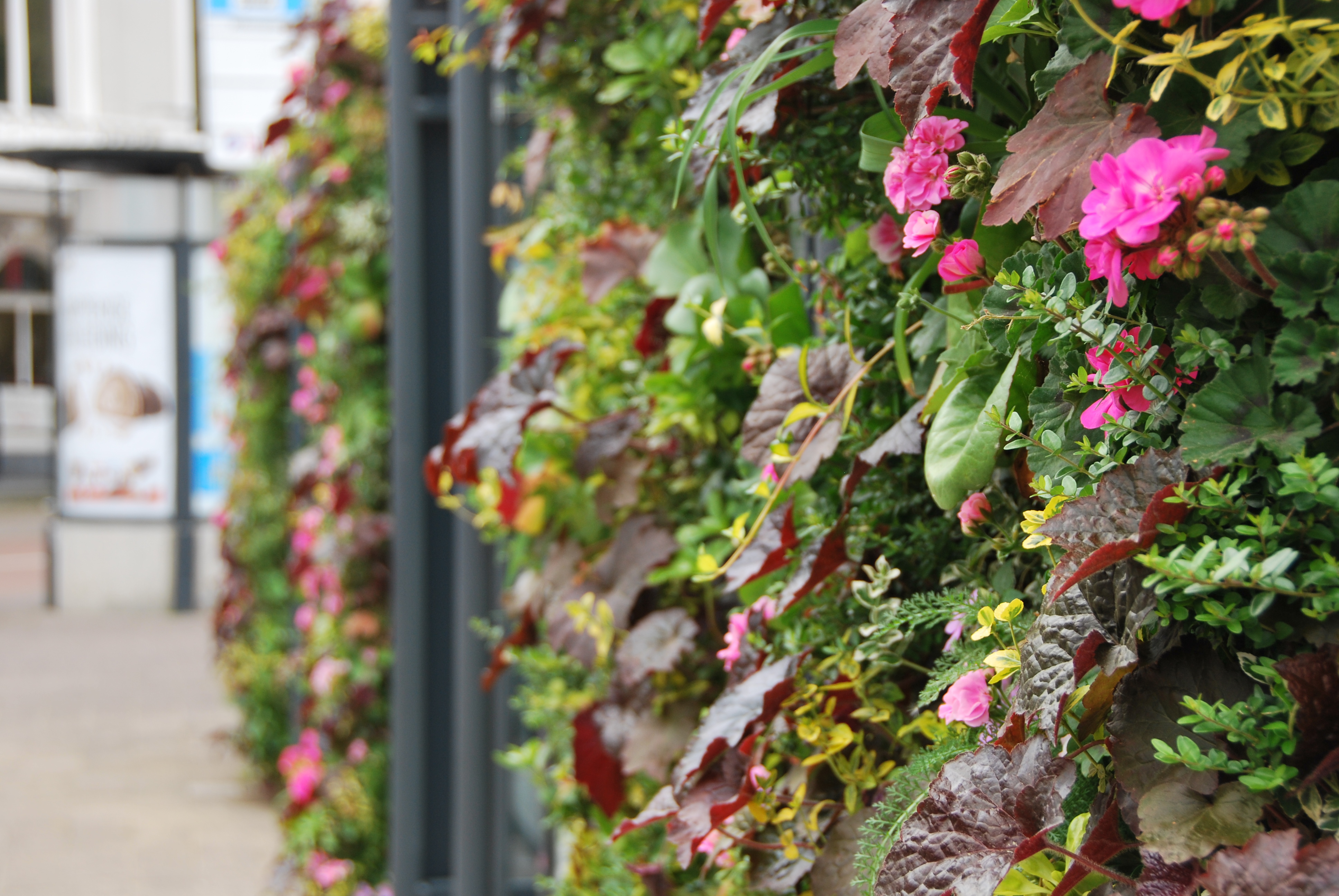 Flowering plants in outdoor SemperGreenwall