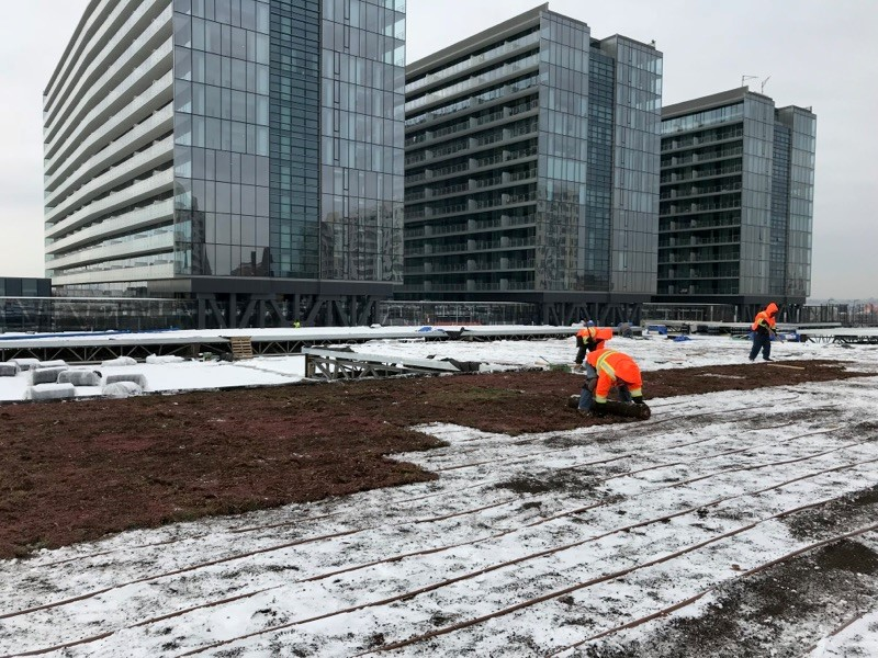 Green roof installation during winter months