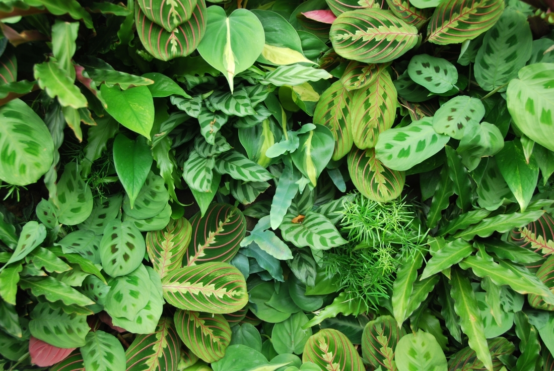 Plants for Indoor Living Walls