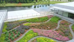 Green roof for landscape architects