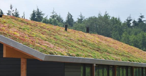 Green roof for trading companies