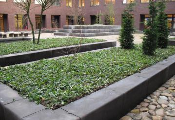 Green ground cover