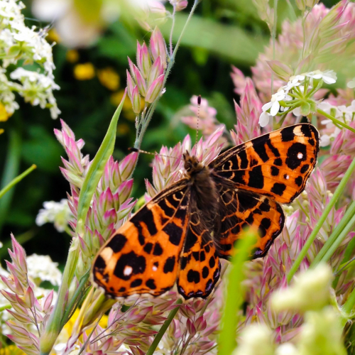 Sempergreen Bees & Butterflies vegetation blanket