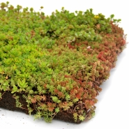 Products For Your Green Roof Sempergreen