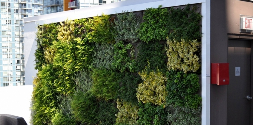 Roof terrace cosmo vancouver with green facade sempergreen for Green wall vancouver