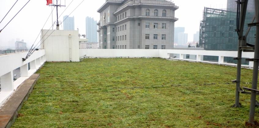 Sedum Roof Customs Office Taiyuan China Sempergreen