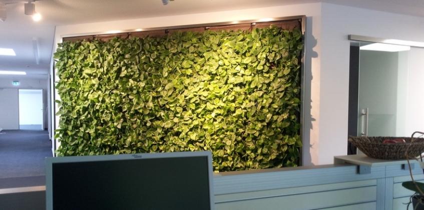 Finger Haus fingerhaus office with indoor living wall sempergreen