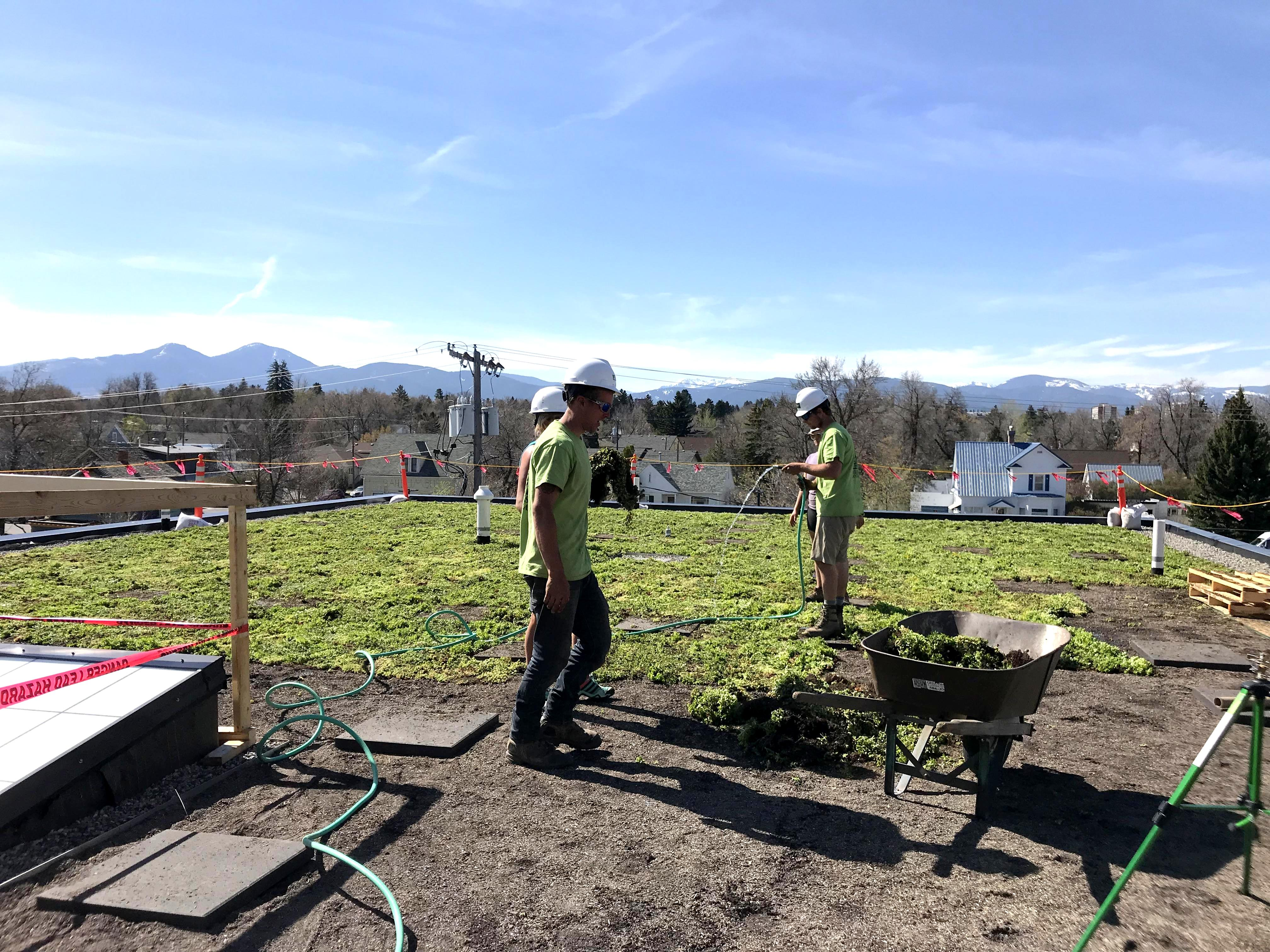 Bozeman Co-op expands with new sustainable building featuring a green roof