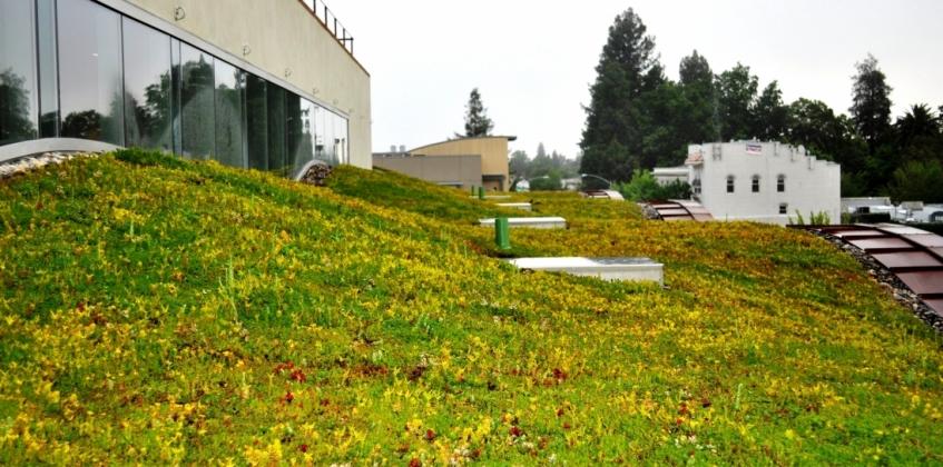 Undulating Green Roof H2 Hotel Healdsburg Ca Sempergreen